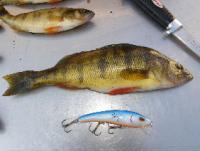 herring1.jpg