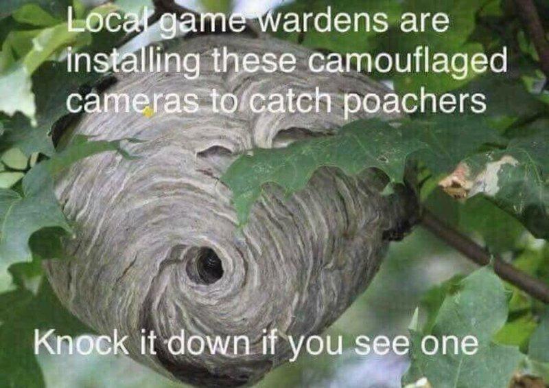 HiddenPoacherCams.jpg